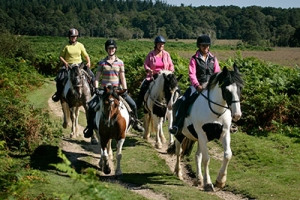 Horse Riding Hacks and Lessons