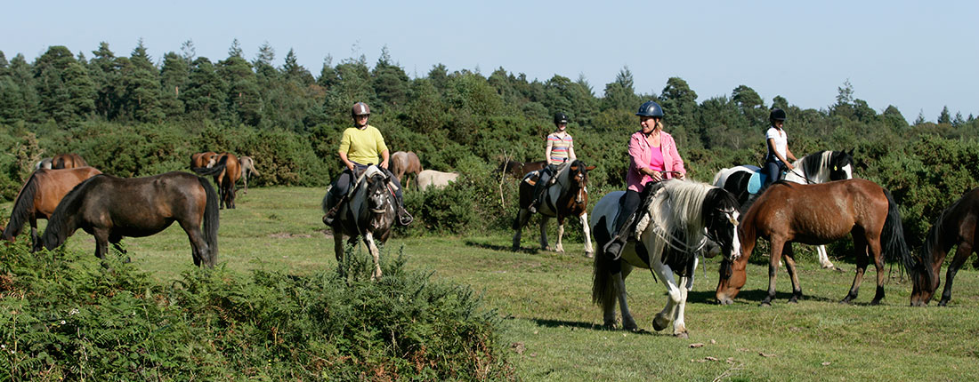 Riding on the open New Forest
