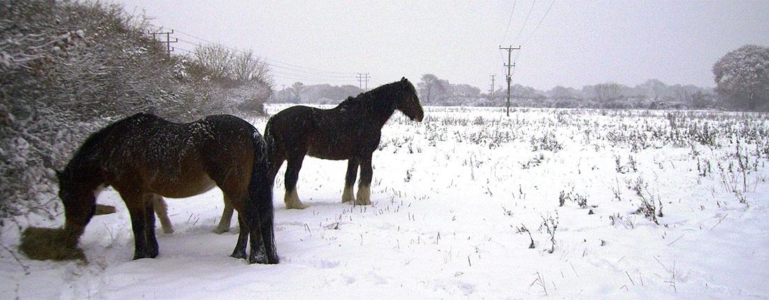 hpslider_snow